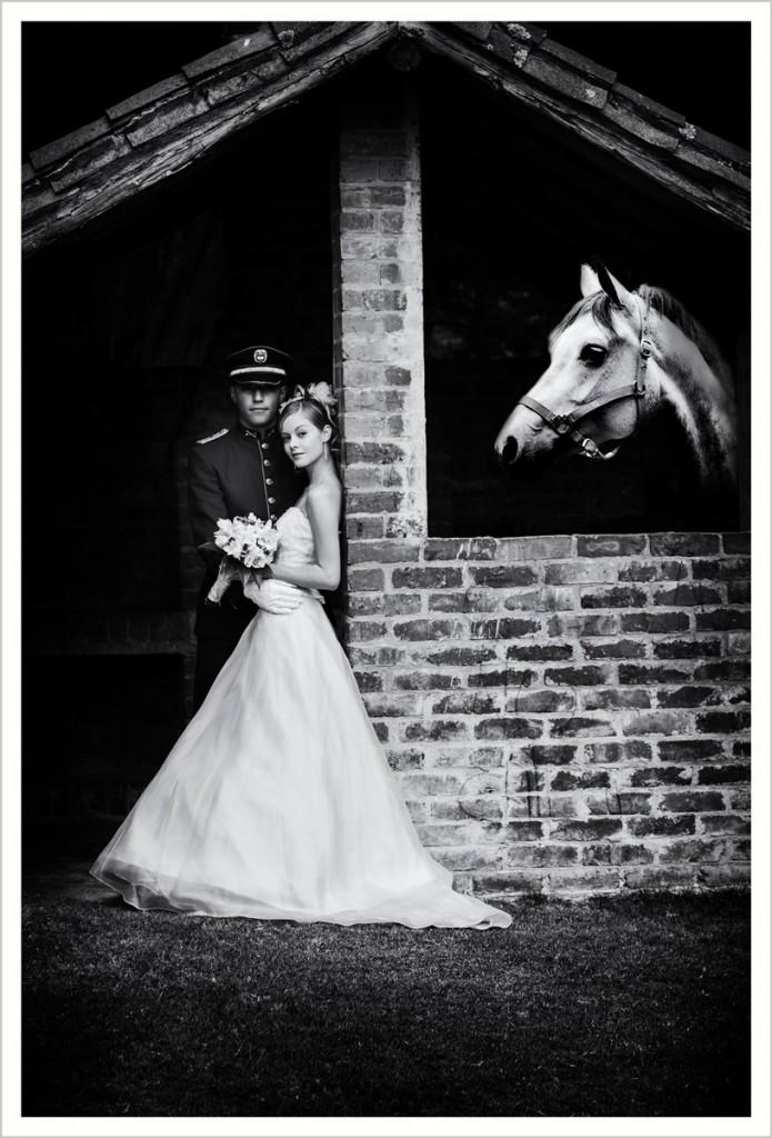 Novia_Horse